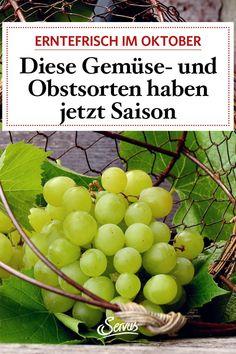 Endlich sind die Tafeltrauben reif, auch die Kürbisse dürfen jetzt vom Feld nach Hause. Was im Oktober in Österreich alles geerntet wird. Kraut, Recipes, Food, Harvest, Carrots, Fresh, Foods, Recipies, Essen