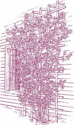 Climbing-roses.detail