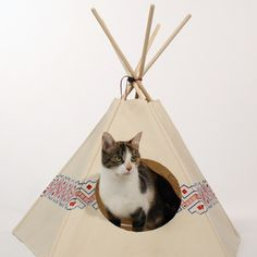 new :  cat tipi
