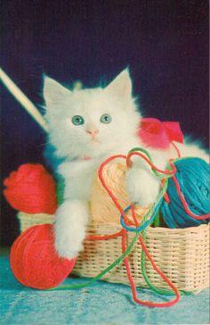 VINTAGE WHITE ANGORA KITTEN CAT W YARN IN BASKET POSTCARD UNUSED LUSTERCHROME