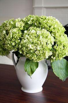 flowers.quenalbertini: Green hydrangeas in a white pitcher