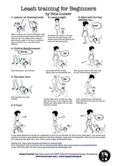 Leash training for #dogs