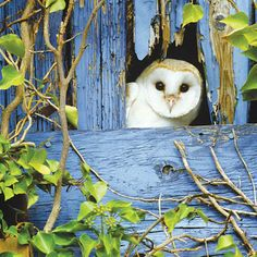 In last year's Big Garden #Birdwatch a few people spotted owls in their garden!