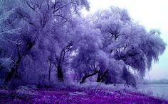winter-splendor-105876.jpg (1920×1200)