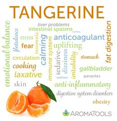 Tangerine essential oil is cold-pressed from the rind of the Citrus reticulata fruit. It has a fresh, sweet, citrusy aroma that is both calming and uplifting. Tangerine oil has anticoagulant, anti-… Doterra Oils, Doterra Essential Oils, Young Living Essential Oils, Essential Oil Blends, Doterra Products, Aroma Tools, Cellulite, Water Retention Remedies, Aromatherapy