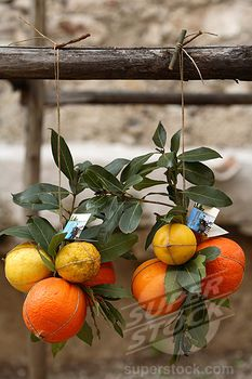 Drying oranges - Lombardy