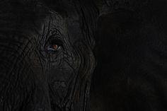 Stunning Close-Up Portraits of Wild Animals - My Modern Metropolis