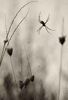 Melancholic Spider by Giorgos Maravelakis