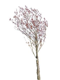 Visit the post for more. Visit Website, Dandelion, Photoshop, Flowers, Plants, Garden, Image, Design, Garten
