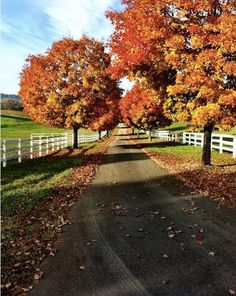fall travel destinations foliage in charlottesville Great Places, Places To See, Beautiful World, Beautiful Places, Virginia Usa, Virginia Is For Lovers, University Of Virginia, Go Camping, Back Home
