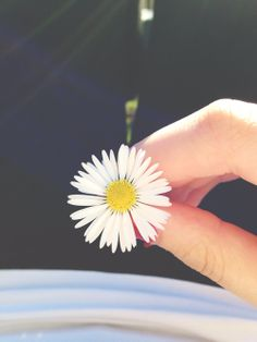 Find images and videos about beautiful, summer and Hot on We Heart It - the app to get lost in what you love. Hand Flowers, Blooming Flowers, Nature Pictures, Cool Pictures, Night Sky Moon, Instagram Story Ideas, Instagram Posts, Rain Wallpapers, Rose Flower Wallpaper