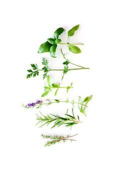 mediterranean herbs   STILL (mary jo hoffman)