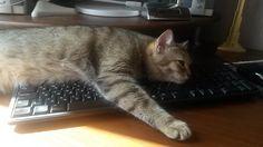 И я отдохну, и ты отдохни, и компьютер отдохнет