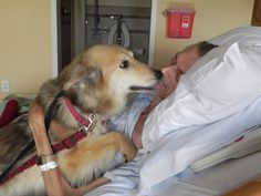 A dying man's last wish: To see his dog...