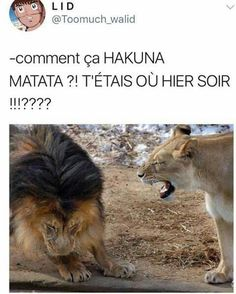 Hakuna matata mais quelle phrase magnifique !