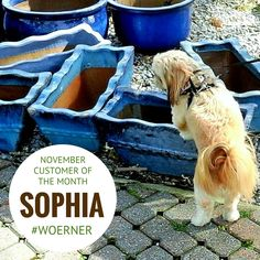 Sophia was our November Pet of the Month Contest winner! #Woerner #Pensacola