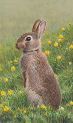 Another Andrew Hutchinson bunny painting Nature Animals, Animals And Pets, Baby Animals, Cute Animals, Wild Animals, Wild Rabbit, Rabbit Art, Animal Paintings, Animal Drawings