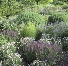 Roy-Diblik-The-Know-Maintenance-Garden-5