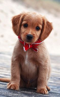 Cute Puppies - 50 Cute Puppies I Adore  <3 <3
