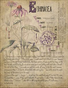 Magic plant knowledge has a long history and has a place in the modern witches Book of Shadows. Book of Shadows pages. Magic plant knowledge has a long history and has a place in the modern witches Book of Shadows. Book of Shado Witchcraft Books, Wiccan Spells, Witchcraft Herbs, Green Witchcraft, Pagan, Magic Herbs, Herbal Magic, Witch Herbs, Modern Witch