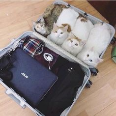 don't forget to pack