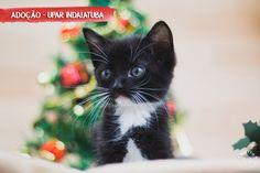 Animais para adoção - Filhotes resgatados pela Upar - Indaiatuba, em um lindo Ensaio Pet tema Natal em nosso estúdio móvel.