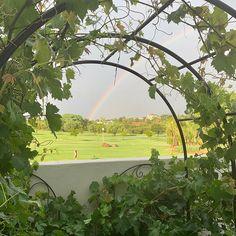 Summers afternoon rainstorm followed by a rainbow #summer #summervibes #summertime #rainbow #rainbow #wineyard #vineyards Summer Vibes, Summertime, Vineyard, Golf Courses, Rainbow, Photos, Rain Bow, Vineyard Vines, Rainbows