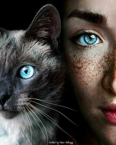 18 Ideas For Eye Drawing Cat Kittens Eye Photography, Animal Photography, Creative Photography, Photography Courses, London Photography, Iphone Photography, Product Photography, Photography Business, Travel Photography