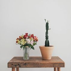 banco de madeira, arranjo de flores, astromelia, cacto, cactus, flower arrangement