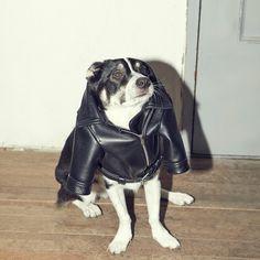 피타_[Pita] Real leather jacket - 주문제작