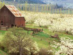 Old barn, rolling landscape