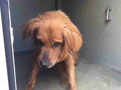 9/21 ILLNESS!!! NEEDS FOSTER NOW PLEASE!!! Thomas was sitting on his own porch when he was confiscated by Animal Control. The dog's owner has never shown up to reclaim her senior dog. Shame on you!
