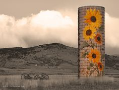 A beautiful painted silo with sunflowers a few miles from the foothills of the Rocky Mountains in North Boulder County Colorado just west of...