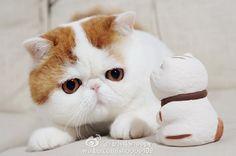 红小胖Snoopy的照片 - 微相册