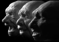 Early Human Fossils, Said To Be Australopithecus Sediba, Revealed In Rock By CT Scan 3 Neanderthal reconstructions