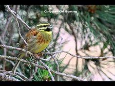 Chants d'oiseaux 02 - YouTube Soul Food, Bird, Youtube, Nature, Animals, Animais, Naturaleza, Animales, Animaux