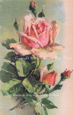 """Pink Rose With Buds"" - Paul de Longpre"