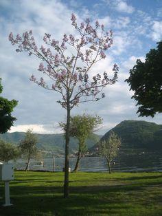Camping Riva San Pietro