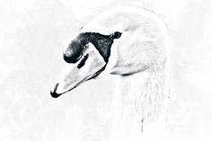 Digitale tekening van een portret van een zwaan