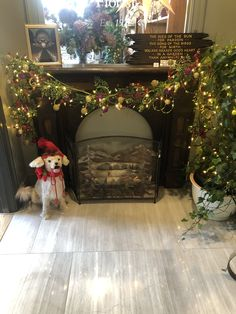 Decorated For The Holidays Wedding Flowers, Holidays, Home Decor, Holidays Events, Decoration Home, Room Decor, Holiday, Home Interior Design, Home Decoration