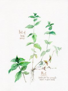 HERBS Mint print Kitchen poster herbs and by VerbruggeWatercolor