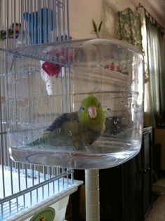 🕊This is a clever way to get your parrotlet to take a bath! It certainly beats holding your hand under the sink while your bird decides for ten minutes whether or not she wants to take a bath today! Parakeet Care, Parakeet Toys, Diy Bird Cage, Bird Cages, Diy Bird Toys, Homemade Bird Toys, Cockatiel Cage, Budgies, Parrots