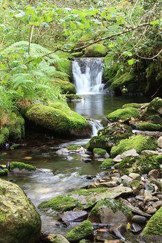 Bosque de Muniellos. Reserva de la Biosfera. Asturias.