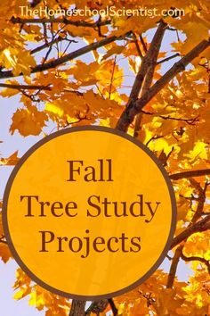 Fall Tree Study Projects - Nancy Larson Science 1