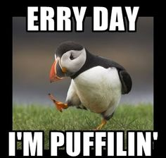erry day i'm puffilin'