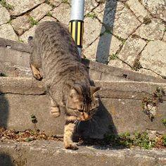 #尾道 #猫 #ノラネコ #catnico_nico332016/03/01 17:15:57