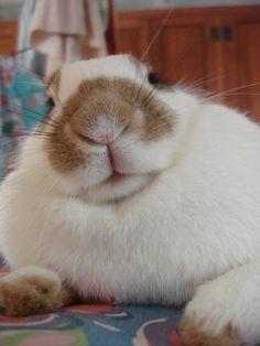 Beautiful B, my rather large pet rabbit!