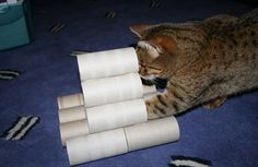 Stack toilet paper rolls.  Make it fun by placing treats inside. Source: http://www.freyacat.co.uk/2009/12/home-made-cat-toy.html