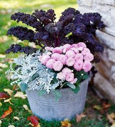Frost-kissed    You can enjoy the beauty of a frosty morning--knowing it won't harm your container garden--with this simple grouping of hens-and-chicks (Sempervivum), Ajuga reptans 'Mahogany', and flowering kale. All three plants take the autumn chill with ease.