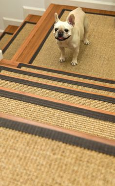 Protect Stairs And Steps In Style And Comfort With Good Looking, Long  Wearing Stair Treads. For Dogs, The Elderly, Your Children, Or Anyone Who  Might Be At ...